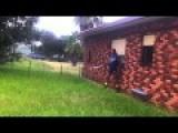 Terrifying Wasp Ordeal. Australia