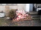 The Ukrainian Chainsaw Massacre: How To Prepare Meat For The Soldiers' Dinner