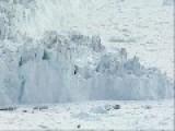 Tidewater Glacier Calves