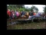 The Biggest Alligator, Crocodile In The World