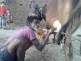 Thirsty Indian Villager Squirting Milk Onto His Face