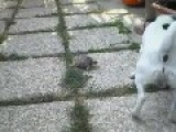 Turtle And Dog Play Fetch
