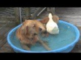 The Story Of A Duck And A Dog - Best Friends Forever