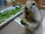 This Is How I Eat My Veggies
