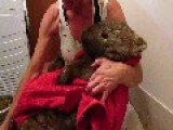 This Old Wombat's Rescue Will Break - And Melt - Your Heart