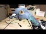 Troubled About That Featured Video? - Don't Worry About Any More Birds Glitching Out