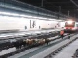 This Can Only Happen In Spain... A Herd Of Goats Inside The Subway