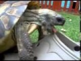 Turtle Having Sex With A Shoe