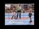Tyson Vs. Lewis Knock Out Punch Boxing