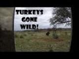 Turkeys Gone Wild!