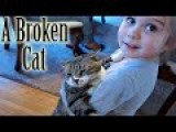 The Tale Of The Broken Cat