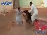 Training Dogs The Arab Way
