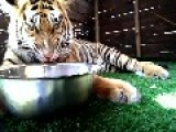 Tiger Defends His Food