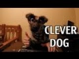 The Most Clever Dog In World - I'm Exciting