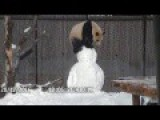 Toronto Zoo Giant Panda Vs. Snowman Toronto Zoo