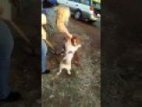 Trailer Park Brawl, Even The Dogs Get Involved