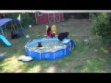 THERE'S BEARS IN THE POOL!!! - Family Of Bears Swimming In Pool - Rockaway, NJ