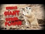 The Giant Gerbil Plague Of China | China Uncensored