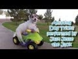 Top 10 Funny Dog Videos Compilation | 2014 NEW HD