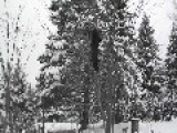 Tree Climb 1000 Ing Branch Fail