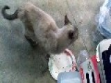 The Random Hungry Cat