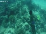 Underwater Hunter Goes Deep Sea Fishing Without Air