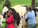 USA: This Colossal Cow Is The Tallest In The World
