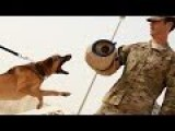 US Air Force Military Dogs Showing Their Skills - Airbase Protection Demonstration Training