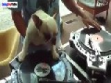 Ultimate Funny Dog Videos Compilation 2015 Dogs And Puppies