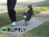 USA: Homeward Bound! Dog Runs For First Time Thanks To 3D Printed Legs