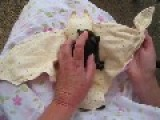 Unwrapping An Orphaned Baby Bat