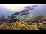 Underwater Raja Ampat Papua