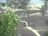 Ukraine National Guard Kills Two Unarmed Teenagers In Mariupol