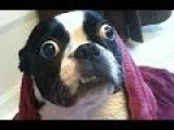Ultimate Funny Dog Video Compilation 2013 NEW HD