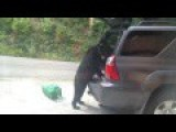 Uninvited Guest Unpacks A Suv
