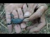 Vietnamese Guys Caught Scorpions To Earn A Living