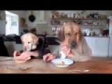 Very Good Table Manners! Hilarious All The Way To The Last Second