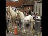 Violence At Horse Fair In Wickham, Hants
