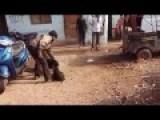 VISCOUS DOG KILLS BABY PIG = In Da Village™®
