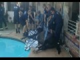 Video: Tranquilized, Snoring Horse Rescued From Pool
