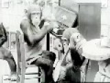 Vintage CHIMP Performance Complete With TWERKING And NOSE PICKING!