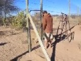 What Happens When This Man Sets A Lion Free From His Enclosure