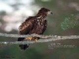 White-tailed Eagles Winter Feeding Ground Web Camera