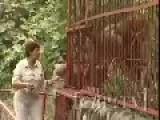 Woman Harassing Lion Behind Bars