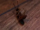 Wasp's Failed Suicide Attempt And Subsequent Murder