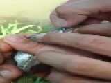 Weed Smoking Fish