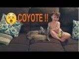Wife Prank Texts Husband She Brought A Dog Home The Pic Shows A Coyote
