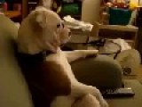 When Your Dog Watches Family Guy