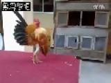 Weird Cock In Town