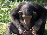 Weird Monkey Drinking Water
